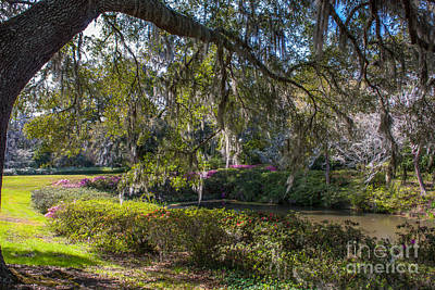 Photograph - Grounds Of Middleton Place Plantation by Dale Powell