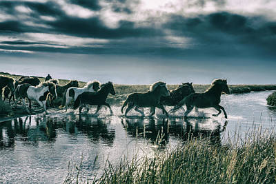 On The Move Photograph - Group Of Horses Crossing A River by Arctic-images