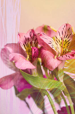 Photograph - Peruvian Lilies by Crystal Wightman