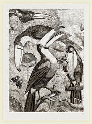 Toucan Drawing - Group Of Toucans by Litz Collection