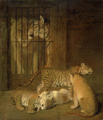 Group Of Whelps Bred Between A Lion And A Tigress A Group Art Print by Litz Collection