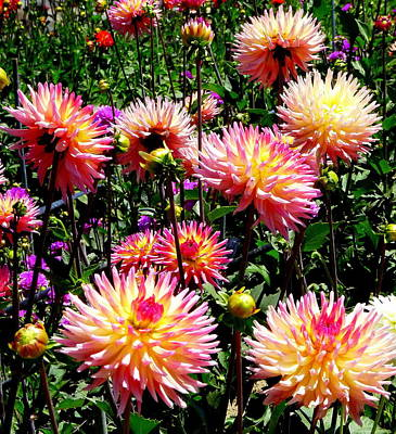 Photograph - Grouping Of Dahlias by Jeff Lowe