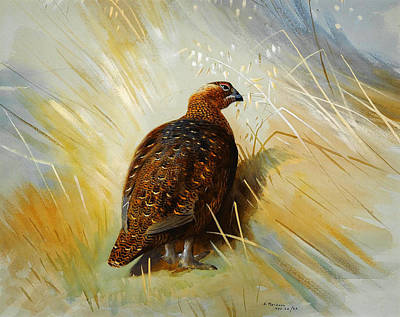 Celestial Painting - Grouse by Celestial Images