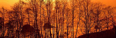 Bare Trees Photograph - Grove Of Alder Trees In Humboldt by Panoramic Images