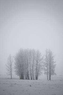Grove Of Trees Covered In Hoar Frost On Print by Roberta Murray