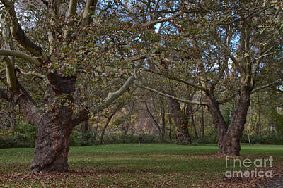 Photograph - Grove Of Trees by William Norton