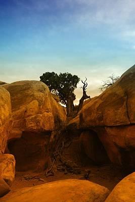 Growing Between The Rocks Art Print by Jeff Swan