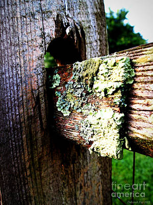 Photograph - Growing Country Fence by Deborah Fay