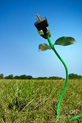 Concept Photograph - Growing Green Energy by Amy Cicconi