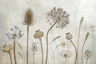 Flower Head Wall Art - Photograph - Growing Old by Mandy Disher