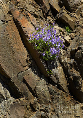 Growing Out Of Rocks-signed-#3810 Art Print by J L Woody Wooden