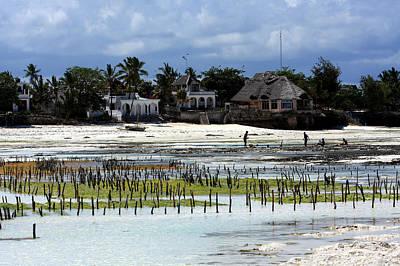 Growing Seaweed On Zanzibar Island Art Print