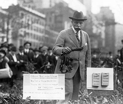 Bryant Park Photograph - Growing Sugar In New York City by Underwood Archives