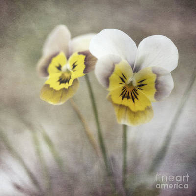 White Flowers Photograph - Growing Wild by Priska Wettstein