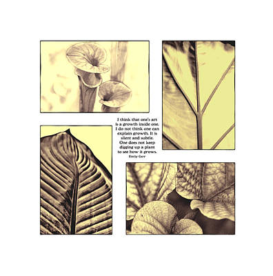 Art Print featuring the photograph Growth by John Hansen