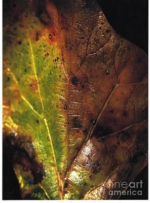 Growth-leaf Art Print