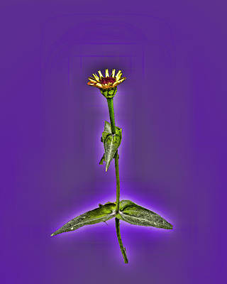 Grunge Flower - Zinnia Art Print by Larry Bishop