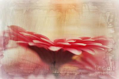 Photograph - Grunge Gerbera Flower by P S