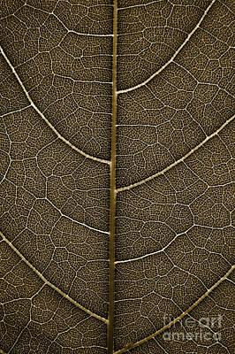 Grunge Leaf Detail Art Print
