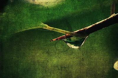 Manipulation Photograph - Hidden Drop by Rhonda Barrett