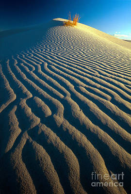 Guadalupe Dune Print by Inge Johnsson