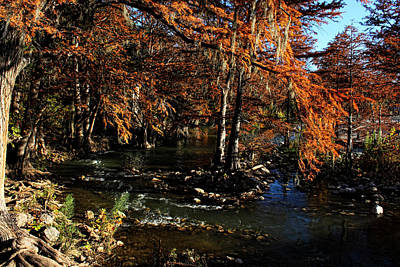 Photograph - Guadalupe River In Gruene Texas by Judy Vincent