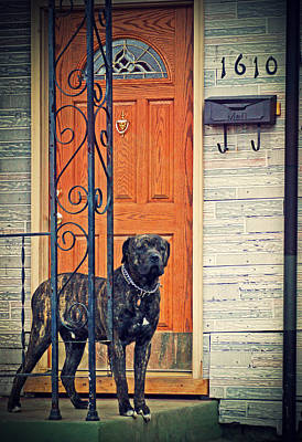 Pitbull Photograph - Guard Duty by Off The Beaten Path Photography - Andrew Alexander