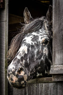 Guard Horse-what's The Password? Art Print