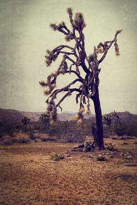 Photograph - Guardian Of The Desert by Lucinda Walter