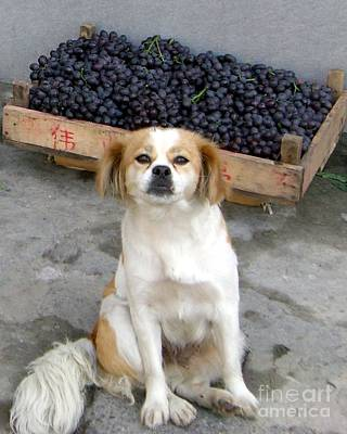 Photograph - Guardian Of The Grapes by Barbie Corbett-Newmin