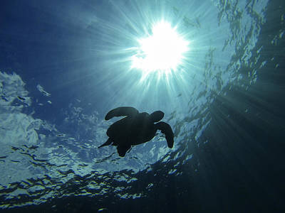 Turtle Wall Art - Photograph - Guardian Of The Sea by Brad Scott