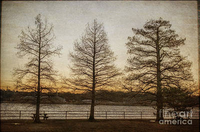 Photograph - Guardian Trees by Terry Rowe