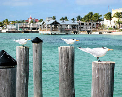 Photograph - Guardians Of Key West by Wade Waldrup