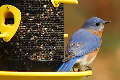 Photograph - Guarding The Feeder by Robert L Jackson