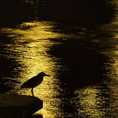 Photograph - Guarding The Gold by Kathy Ponce