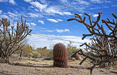 Photograph - Guarding The Line In The Sonoran Desert by Lee Craig
