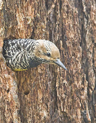 Guarding The Nest Art Print by Bob Dowling