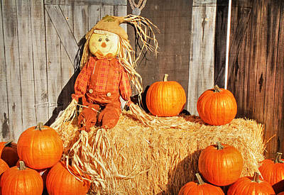 Guarding The Pumpkins Art Print by Donna Kennedy
