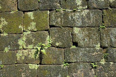 Acropolis Photograph - Guatemala, Quirigua Mayan Ruins by Cindy Miller Hopkins