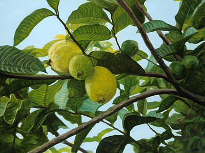 Guava Tree Painting - Guava by Michael Allen Wolfe