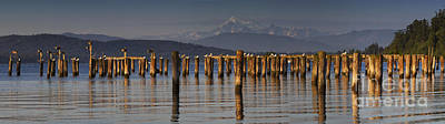 Animals Photos - Guemes Channel Trail Panorama by Mark Kiver