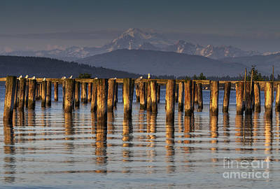 Photograph - Guemes Channel Trail View by Mark Kiver