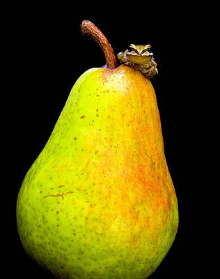 Frogs Photograph - Guest A-pear-ance by Jean Noren