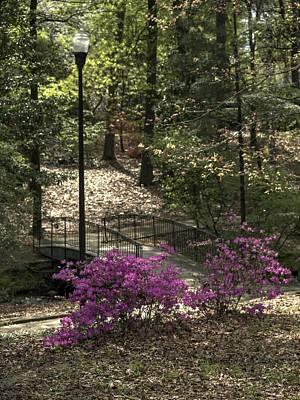 Photograph - Guignard Park-2 by Charles Hite