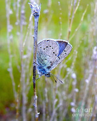 Photograph - Guilded Blue by KD Johnson