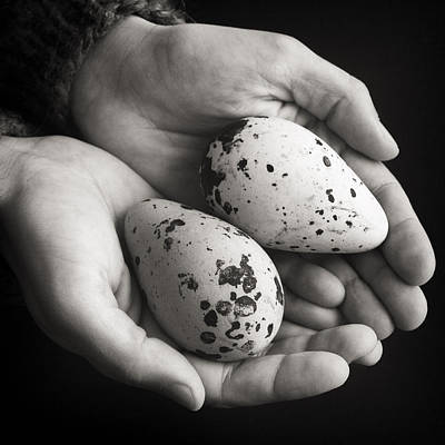 Photograph - Guillemot Eggs Black And White by For Ninety One Days
