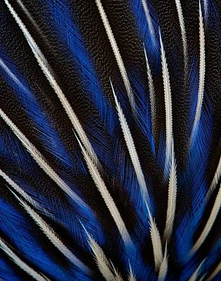 Photograph - Guinea Fowl Feathers by David Beebe