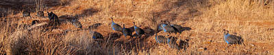 Photograph - Guinea Fowl by Jim DeLillo