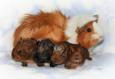 Cavy Photograph - Guinea Pig Family by Jutta Maria Pusl