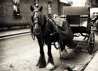 Photograph - Guinness Horse by John Rizzuto